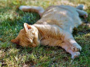 chat se reposant à l'ombre, repos, détente
