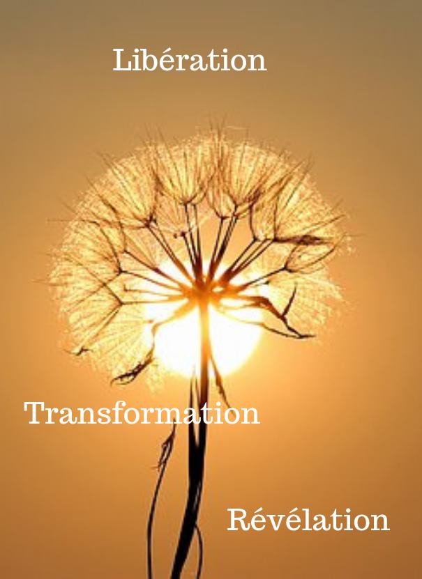 liberation, transformation, révélation par access bars . Fleur de pissenlit au soleil levant