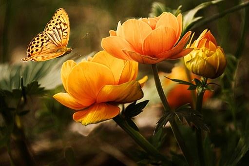 papillons et pétales messagers d'amour entre les vivants et les morts