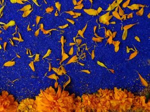 pétales de fleurs , jour des morts